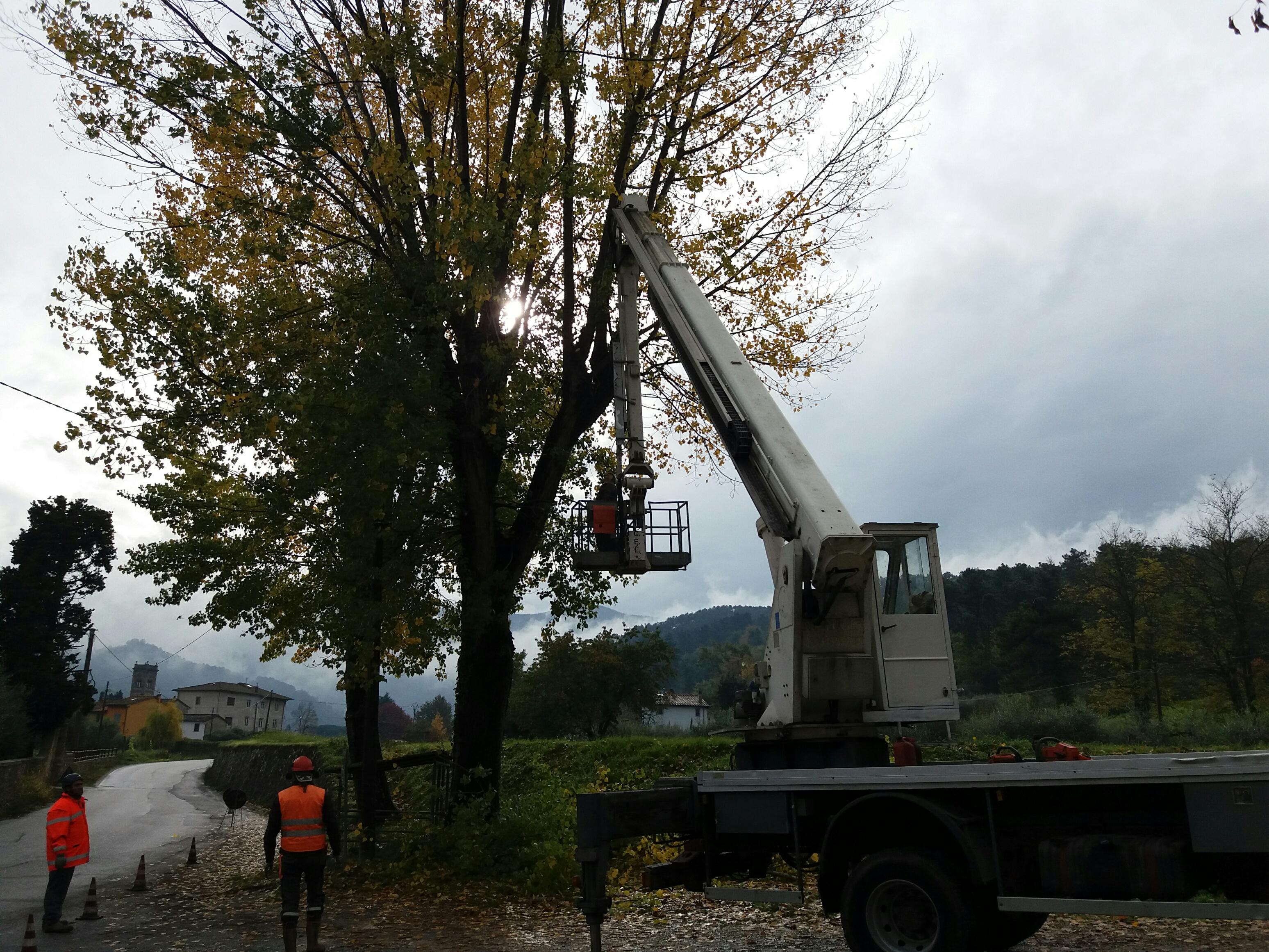 Taglio albero con cestello
