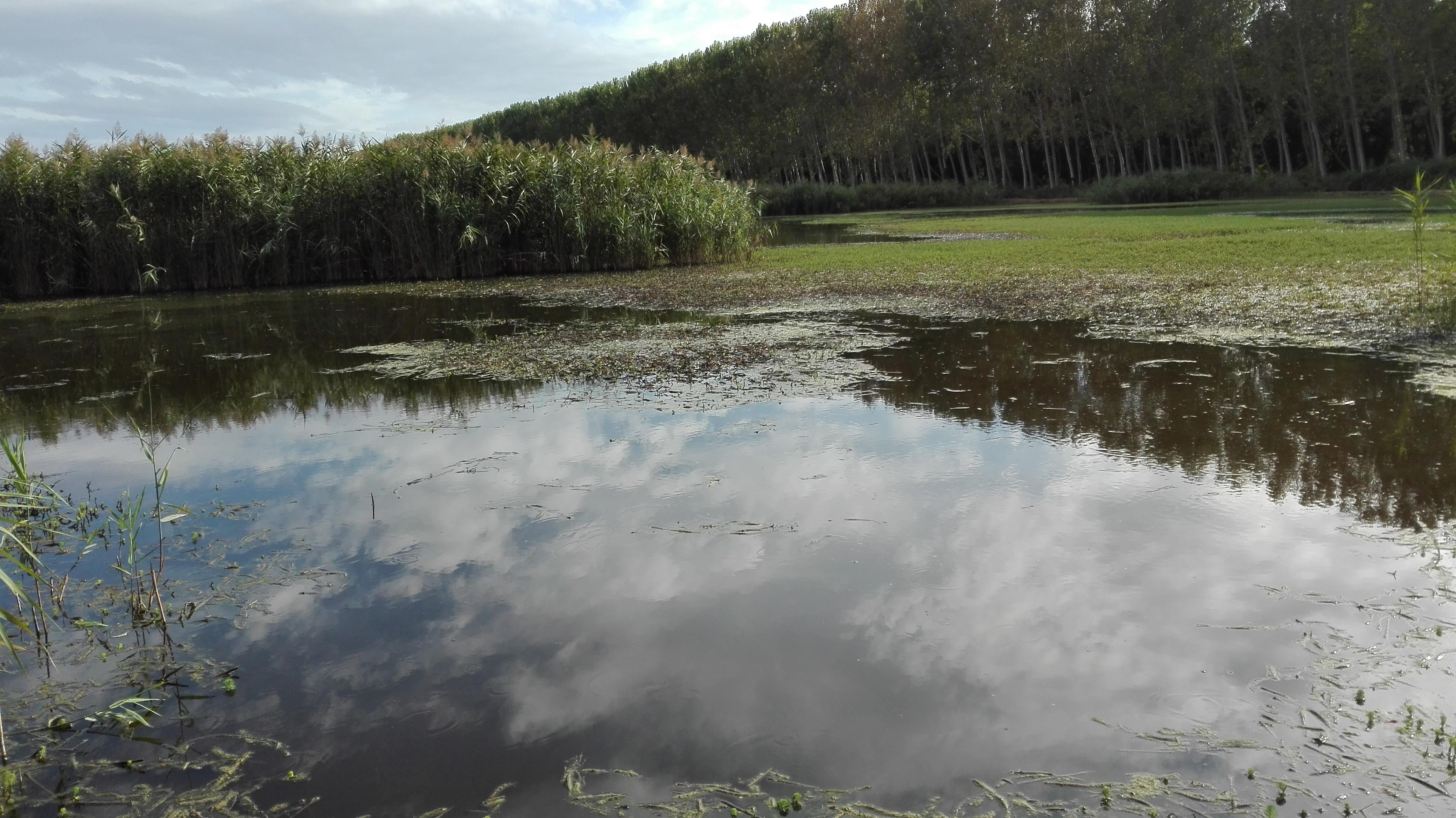 L'area dell'impianto di fitodepurazione di San Niccolò a Vecchiano 15.09.2016